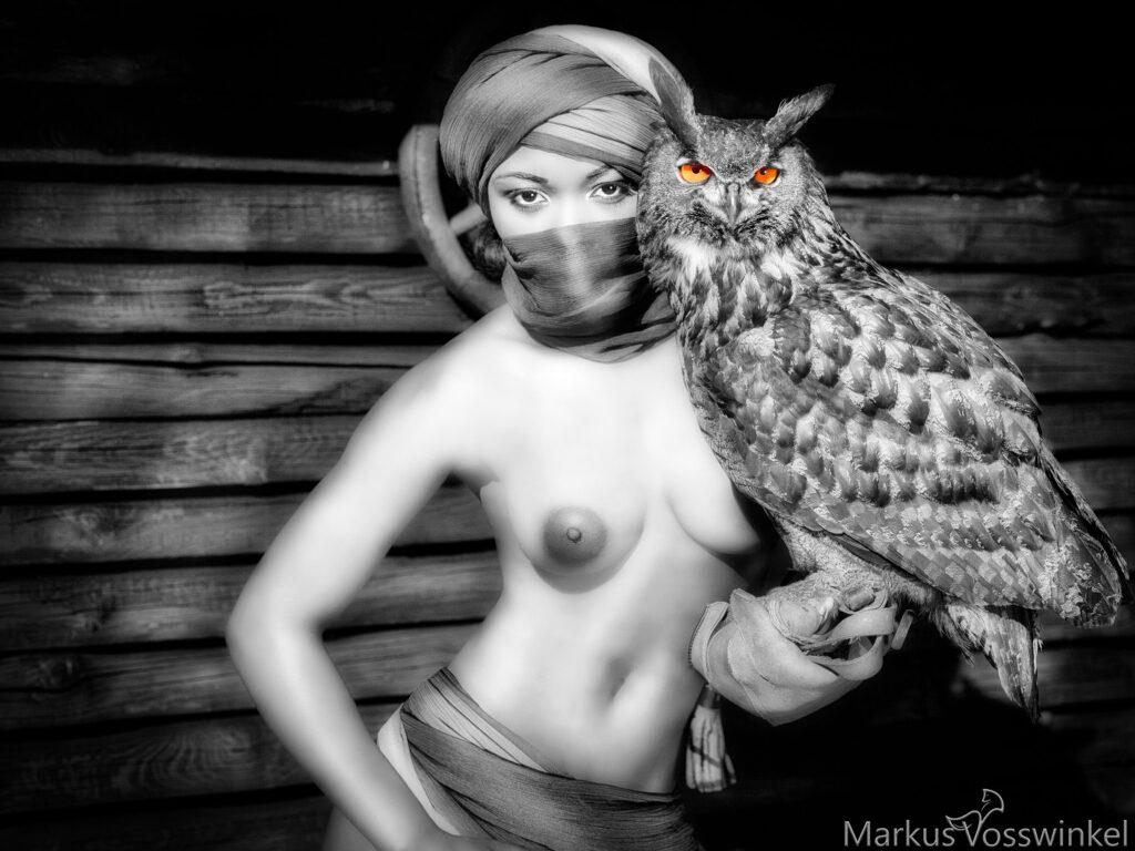 Color Key, Owl eye color